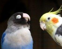 """Парк флоры и фауны """"Роев ручей"""" продает попугаев"""