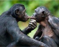 Казанцев зовут в зоопарк выбрать влюбленную парочку животных