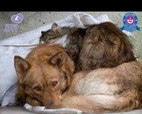 Пройдет благотворительный вечер в пользу животных