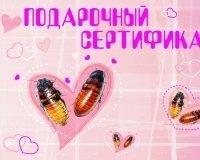 """В День святого Валентина """"Роев ручей"""" может назвать тараканов вашими именами"""