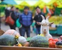 12 -14 февраля в Сургуте пройдет ярмарка «Выходного дня»