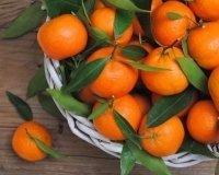 В Россию начали поставлять сирийские фрукты