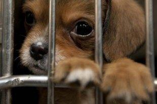 5 приютов для животных в Тольятти