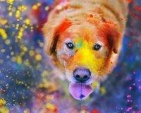 В Екатеринбурге ожидается кратковременный рост поголовья разноцветных пёсиков