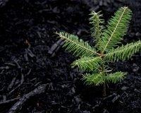 В Челябинске бесплатно раздадут саженцы деревьев