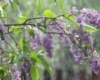 К выходным в Тольятти придут дожди и похолодание