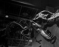 21 мая в Ижевске пройдет очередная «Ночь музеев»