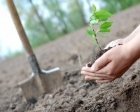 Сургутянам предложили посадить лес