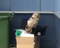 Возле «Лада-Арены» Тольятти поселилась сова