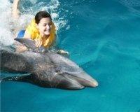 В Казани летом пройдут гастроли челнинского дельфинария