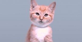 Видео дня: как менялся эталон котиков за 100 лет