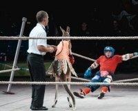 2 июня в Казани стартуют гастроли Московского цирка Юрия Никулина