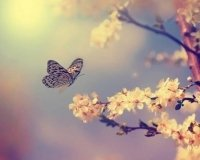 В парке бабочек на один день снижают цену за вход