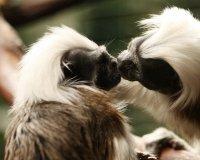 Экзотические приматы пополнили самарскую коллекцию