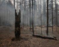 В Тольятти на месте выгоревшего леса появится парк развлечений