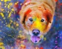 2 июля в Челябинске пройдёт парад разноцветных собак