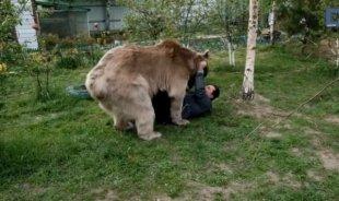 Видео дня: огромный медведь живет в семье и думает, что он собака