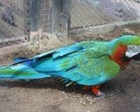Все попугайчики «Роева ручья» переехали в уличные вольеры