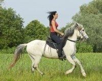 Тюменцев приглашают провести день на конюшне