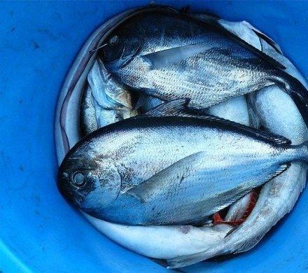 Где ловить рыбу за городом и в Красноярске