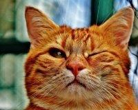 Как фотографировать кошек, расскажут в «Мяулэнде»