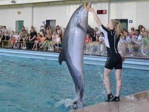 Шоу дельфинов «Казанские каникулы»