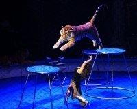 В Белгород приехал Московский цирк Никулина