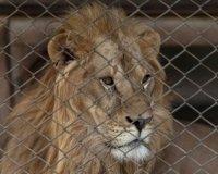 В Тольятти написали петицию, требующую проверить содержание животных в кафе «Очаг»