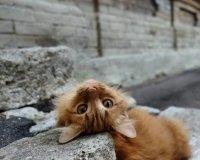 У самарских бездомных кошек появился свой аккаунт в Instagram