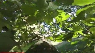 Белка украла GoPro-шку и попрыгала с ней по деревьям
