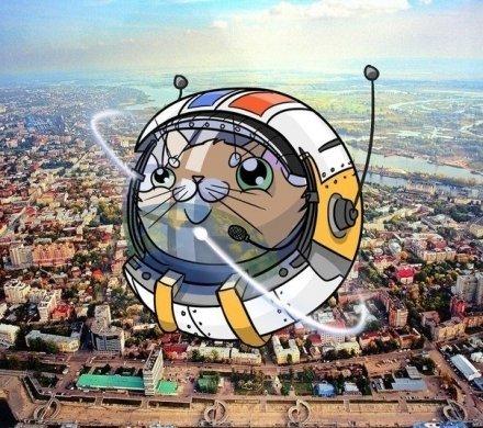Как котов в космос запускали