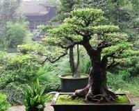 Осенью на Кайской горе откроется корейский сад