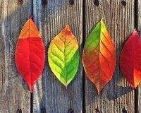 Красноярцев ждет холодная осень и переменчивая зима