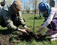 """В Сургуте высадили первые деревья на """"Аллее доблести и славы"""""""