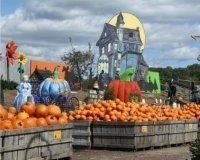 На фестивале урожая в Казани будет много фермерской продукции и развлечений