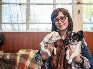 Интернациональная выставка собак всех пород