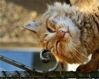 16 октября в Тольятти состоится выставка-раздача кошек