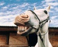 1 октября казанцев приглашают на праздник «День коня»