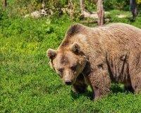Вход в часть красноярского заповедника «Столбы» ограничили из-за медведей