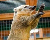 22 октября в Тольятти откроется «Ручной зоопарк»