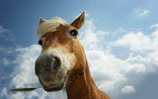 Металлург может лишиться коняшек