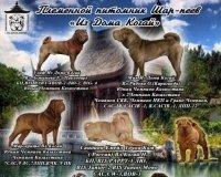 В племенном питомнике «Из Дома Когай» появились три чудесных щенка