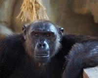 Жителей екатеринбургского зоопарка ждет переселение