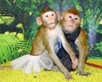 В Казани в ТЦ «Республика» работает контактная выставка обезьян