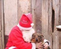 Карагандинцев приглашают на новогоднюю выставку бездомных животных