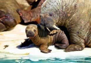 Уфимские моржи проведут детскую тренировку