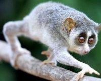 В «Семье» проходит выставка обезьян