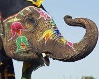 В Самаре состоится выставка работ хозяина «дачи со слонами»