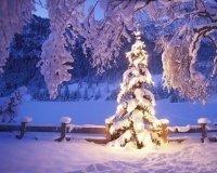 В Самаре завершают установку главной елки