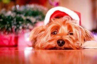 Топ-5 способов создать новогоднее настроение